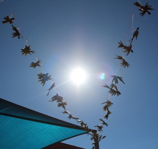 birds 5 sml